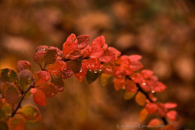drop-of-rain1